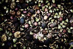 Fødevareminister Dan Jørgensen vil nu gøre det lovligt at bytte frø på hobbyplan. - Foto: MAGNUS HOLM #dkgreen