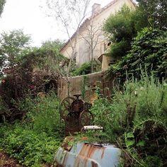 雨上がりの散歩♪雨垂れアートの壁はもはや元の色が不明…^^;それを味とするかブラシでこすり落とすか悩む~ホントちょうどいいところで止まってくれるワザはないものかな~(笑) #マイホーム#雨垂れ#強烈#味がある #しっとり#ちょうどいいを過ぎると汚い壁#garden#ナチュラルガーテン