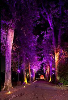 trees with orange and purple halloween lights! Modern Landscape Lighting, Landscape Design, Garden Design, Casa Halloween, Halloween Trees, Purple Halloween, Retro Halloween, Event Lighting, Tree Lighting