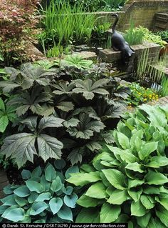 ~Iris ensata, Caltha palustris, Hosta sp and Rodgersia podophylla