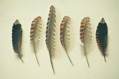 Feathers No.2 - Nature photography, still life photo, brown shades, black, nature art, pheasant plumes, minimalist art
