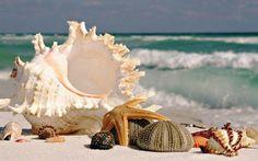 Johnson Beach Perdido Key, a part of Gulf Islands National Seashore, is a top spot for finding beautiful seashells!