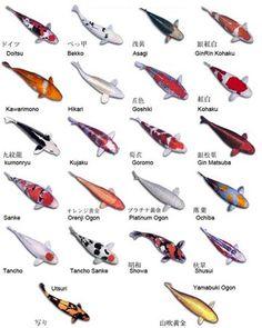 Mimii @ LARGE: Koi Fish.....