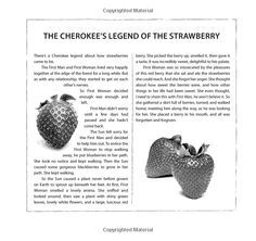 Cherokee's Legend of the Strawberry