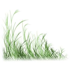 grass ❤ liked on Polyvore featuring grass, nature, flowers, plants and tubes