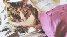 We love ettitude cats! @cass.edits Show us your pets with our sheets! #sleepwithettitude