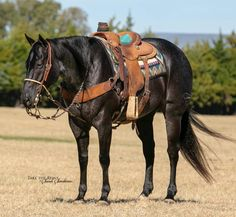 Charro, American Quarter Horse, Horse Tack, Beautiful Horses, Friends In Love, Paint Horses, Painting, Animals, Life