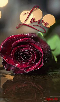 Lovely Good Night, Love You Gif, Angel Wallpaper, Flowers Gif, Romantic Gif, Lighthouse Art, Beautiful Flowers Pictures, Love Rose, Cute Wallpapers