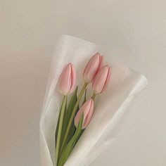 Most current Pic Tulip aesthetic Tips Prolonged stay the tulip ! Grow this particular vibrant colored special place mobile phone . a gorgeous exhi Flower Aesthetic, Pink Aesthetic, My Flower, Beautiful Flowers, Cactus Flower, Exotic Flowers, Purple Flowers, Spring Flowers, Pastell Wallpaper
