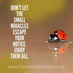 Small miracles lead to big ones.  International Healer, teacher, speaker coach and mentor. Energy adjustments. Physical, spiritual, emotional, mental clearing and healing.  Clearing and cleaning the financial hologram, behaviours and programming. Healing for relationships. Worldwide via Skype. ❤️ www.themiraclementor.co.nz