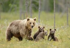 1X - Mother and Cubs by Brian Scott
