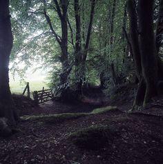 Lewesdon Hill Dorset