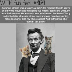 "Abraham Lincoln was een ""crazy cat lady"" - WTF Fun . Abraham Lincoln was een ""crazy cat lady"" - WTF Fun . History Memes, History Facts, Crazy Cat Lady, Crazy Cats, Hate Cats, Wtf Fun Facts, Random Facts, Random Stuff, Creepy Facts"