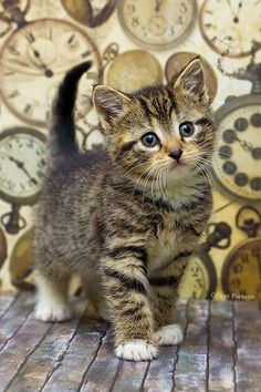 Kitten time by *hoschie on deviantART