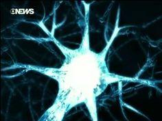 Neurociência - Os Segredos Do Cérebro Humano