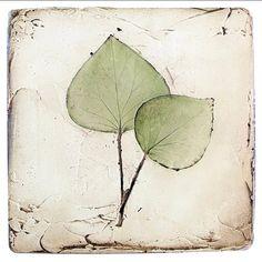 Cute little leaf print🍃 . Plaster Cast, Love Home, Art Of Living, Leaf Prints, Botanical Art, Pretty Little, Plant Leaves, Pottery, Cute