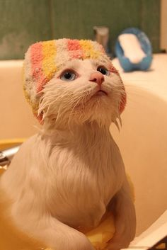 Adorable cute cat after taking bath... to see more click on picture
