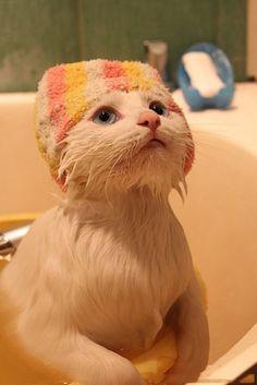 Cute little kitten in Bath Tub | Annie Many