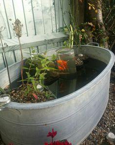 Garden pond in tin bath Gartenteich im Zinnbad Container Pond, Container Water Gardens, Container Gardening, Patio Pond, Diy Pond, Garden Pond, Small Water Gardens, Indoor Water Garden, Backyard Water Parks