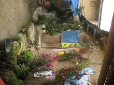 One of my favorite pictures in Pampas Grande, Peru. The vibrant colors of plants and flowers against the subdued mud/clay walls. The inner sanctum of these courtyards so few enter.