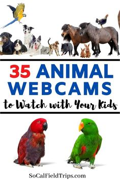 Looking for some heartwarming entertainment to enjoy from home? We've rounded up the best live animal cams from around the world you can watch online! Learning Websites, Educational Websites, Home Learning, Fun Learning, Educational Toys, Science Activities, Activities For Kids, Virtual Field Trips, Kids Education