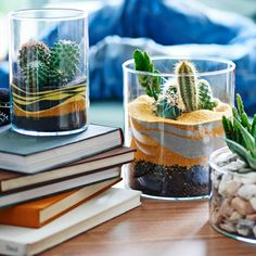 The everyday every day — 3 ways to grow and show your own indoor...