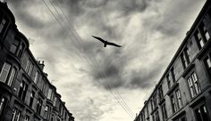 """I always wonder why birds choose to stay in the same place when they can fly anywhere on the earth, then I ask myself the same question. Monochrome Photography, Urban Photography, Black And White Photography, Street Photography, Black And White Clouds, White Sky, Black White, Scotland Street, Glasgow Scotland"