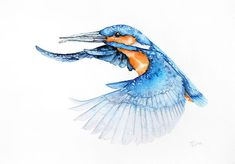Birds are beautiful, full of grace and elegance. They have always fascinated me, so I became an illustrator of animals, in particular birds.  Despite the fact that every day I work as an architect, I always return to painting nature.