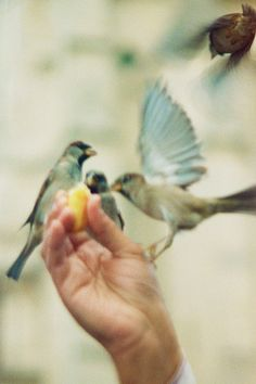 Give food to the birds, you will then be surrounded by the wings of love, you will be encompassed by the joys of little silent hearts! ~ Mehmet Murat ildan