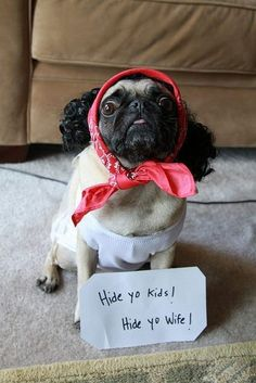 pictures of PUGS in costume! where are the pugs going? a halloween party? Funny Shit, Haha Funny, Funny Cute, Funny Dogs, Funny Animals, Cute Animals, Funny Stuff, Funny Things, 9gag Funny