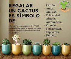 Eco Garden, Home Vegetable Garden, Herbal Cure, Cactus Y Suculentas, Plant Decor, Cactus Plants, Cactus Bar, Flower Vases, Organic Gardening