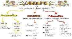 Mapa Mental: Carboidratos                                                                                                                                                                                 Mais