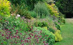 Herbaceous perennials are a reliable group of plants whose growth cycle runs like clockwork. Year after year, they come into flower year from early spring to late summer and then over winter most die back to soil level, ready to start over again. Once established, perennial plants are relatively