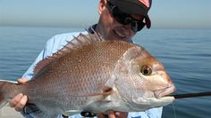 Fishing Australia – fishing reports, fishing guides - LifeStyle Channel