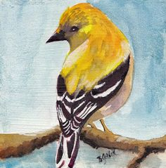 This is about original watercolor paintings of varied subject matter, and children's book illustrations Bird Painting Acrylic, Watercolor Bird, Watercolor Paintings, Watercolors, Yellow Artwork, Bird Artwork, Yellow Finch, Yellow Birds, Yellow Things