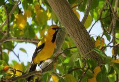 Auf, in die Karibik: Curacao - Roadtrippin' Bird, Caribbean, Island, Birds
