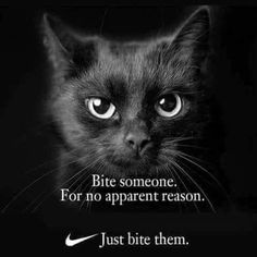 These cute kittens will bring you joy. Cats are wonderful friends. Funny Animal Memes, Cute Funny Animals, Funny Cats, Funny Memes, Funniest Cat Memes, Memes Humor, Funny Videos, Cute Kittens, Cats And Kittens