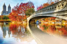 I can see why so many people want to visit Central Park especially around fall . 📍Central Park, New York 📷 Dm for credit 👉👉 . Central Park, Beautiful Places In America, Most Beautiful Cities, Beautiful Scenery, East River, World Trade Center, Jonathan Adler, Park In New York, New York City