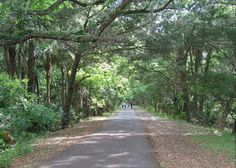 St. Joe's Walkway - Palm Coast