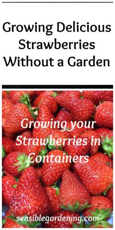 Growing delicious strawberries without a Garden with Sensible Gardening