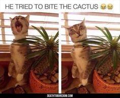 #humor #animals #fun #memes #girls #soumo_eu