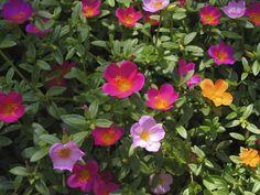 https://flic.kr/p/whuLVN   Flores de colores