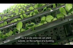 SKY URBAN VERTICAL FARMING SYSTEM