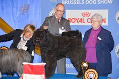 Brussels Dog Show 2012 – Russia Wins the Cup!    By Karl Donvil