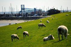 """""""Hartelk welkimen"""" heißt Herzlich Willkommen und so fühlen wir uns jedes Mal, wenn wir auf Föhr ankommen. Wie immer erwarten uns herrliche Strände, sattes fruchtbares Grün, das Wattenmeer und ein Blick bis zum Horizont und noch weiter.….…mehr unter: http://welt-sehenerleben.de/ #Föhr #Nordsee #Urlaub #Reisen"""