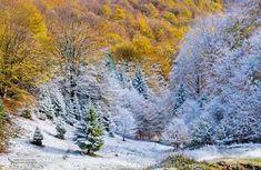 A Winter's Tale - Queen, in fotografiile lui Mircea Costina Winter's Tale, Snow, Queen, Outdoor, Rome, Outdoors, Outdoor Games, The Great Outdoors, Eyes