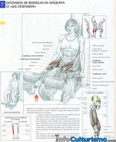 Extension Piernas Maquina Leg