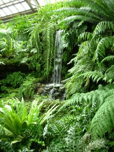 "Tropical garden, pond and plants. More Polystichum ""Spiny Holly Fern' John M Bailey Green forest Phil koch Small Tropical Gardens, Tropical Garden Design, Tropical Backyard, Tropical Landscaping, Tropical Plants, Backyard Landscaping, Bali Garden, Dream Garden, Garden Pond"