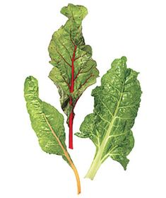 Chard  How to choose: Chard is typically classified by the color of its stems―red, white, green, or rainbow (a combination of colors, including yellow). Look for crisp, crinkly green leaves; avoid ones with spots or holes. The smaller the leaves, the sweeter their taste. (Large leaves and stems are often chewy.)    How to store: Refrigerate chard, unwashed, in a plastic bag in the vegetable drawer.    Shelf life: Chard will last two to three days.