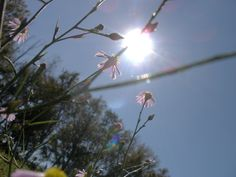 Some call em weeds....I call em flowers. One of the best pics I think I have ever taken.